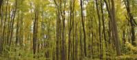 Fall hiking on the Bruce Trail, Bruce Peninsula | Muffy Davies