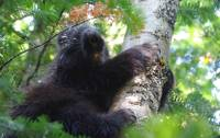 Porcupines can be found along the Traversee de Charlevoix |  <i>Leigh McAdam</i>