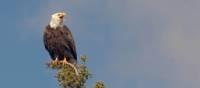 Watch for Bald Eagles during a coastal hike in Newfoundland | Newfoundland and Labrador Tourism