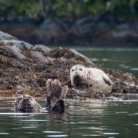 Playful pals in Canada's Pacific | Jenn Dickie Photography