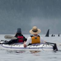 There's no mistaking the distinctive Orca in Johnstone Strait | Jenn Dickie Photography