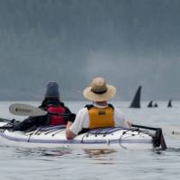 There's no mistaking the distinctive Orca in Johnstone Strait   Jenn Dickie Photography