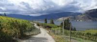 The Kettle Valley Rail Trail goes through many vineyards | Annika Rautiola