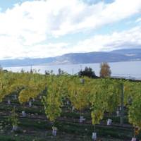 Naramata vineyard along the KVR trail, Okanagan | Annika Rautiola