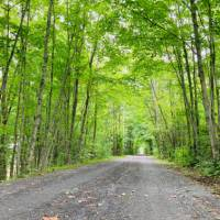 Cycling under the natural arch of trees | Caroline Mongrain