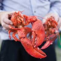 Enjoy fresh lobster during your stay in New Brunswick | Guy Wilkinson