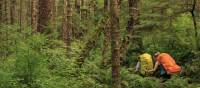 This hike will take you through lush rainforest   Northern Vancouver Island Tourism/Steven Fines
