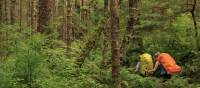 This hike will take you through lush rainforest | Northern Vancouver Island Tourism/Steven Fines