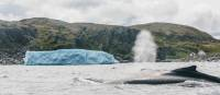 Capturing a whale and iceberg in one shot at Quirpon Island | Finn Beals