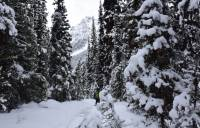 Forests blanketed in pure white snow in the Rockies