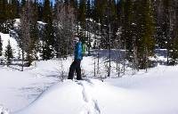 Break your own trails in fresh, powdery snow