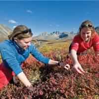 Berry picking in Tombstone Park   Gov't of Yukon / Fritz Mueller