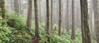Old and new growth intermingle in BC's magical forests | Patrick Troughton