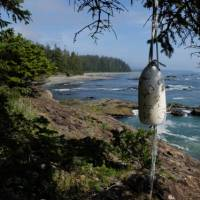 Classic view along the West Coast Trail