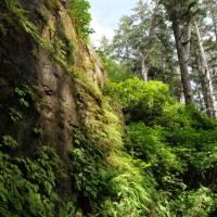 Breathe the fresh rainforest air on Vancouver Island