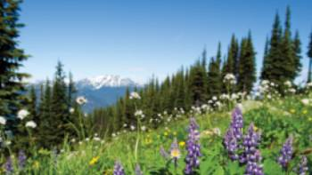Summer wildflowers in the Coast Mountains, BC | Tourism Whistler/Mike Crane