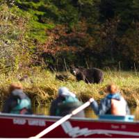 Bear watching by boat | Tom Rivest
